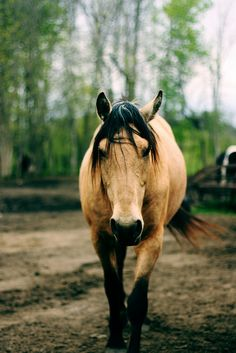Horses are amazing in so many ways! They also give and help you! They give you friendship, a true friend, some one to guide you, and also to help you through life!