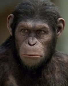 Rise of the Planet of the Apes: Caesar is my boy. I love him too. Tough, intelligent and loving apes.