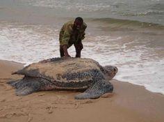 Esta tortuga es la más vieja del mundo