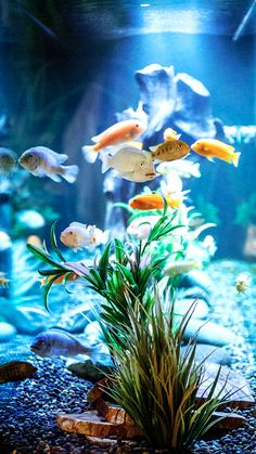 Our Post Oak Gallery Furniture location has a very tranquil fish aquarium. When you visit the bedding department don't forget to go check it out! #fish_tank #water_tank #colorful_fish #pets  | Houston TX | Gallery Furniture | Aquarium Setup, Aquarium Design, Colorful Fish, Tropical Fish, Planted Aquarium, Aquarium Fish, Underwater Art, Fish Wallpaper, Fish Farming