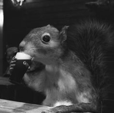 squirrel at the bar drinking a guinness ~ 27 Random Funny Pics