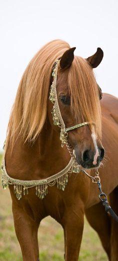 Arabian, not my favorite breed, but beautiful.