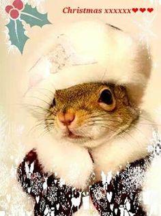 Quirrels seasons wishes <3