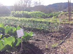 Mustards grille garden Napa valley California