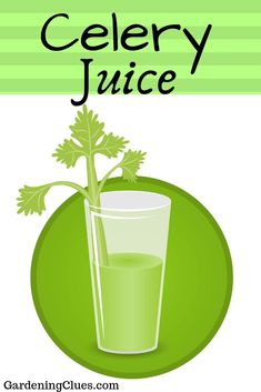 Drinking celery juice has a lot of advantages. It fights colds and migraines and helps your liver to process food. [RECIPES HERE] Celery Recipes, Celery Juice, Drinking, Herbs, Gardening, Food, Beverage, Drink, Celeriac Recipes