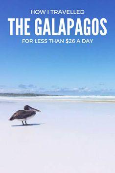 Galapagos on a budget - pinterest design