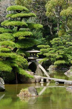 Jardin japonais avec un arbre nuage magnifique, relativement reposant ....