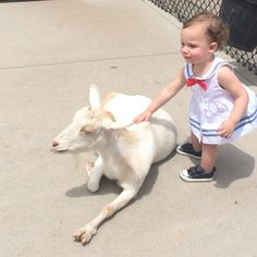 #goats #Padgram