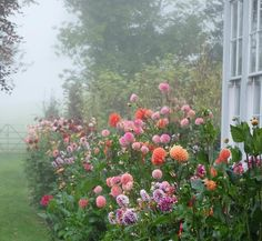 house, mist and flowers