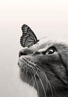 Cat and Butterfly - spicedpumpkins