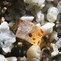 Sand grains under the microscope microscopic sand photography art photo microscopy artwork Gary Greenberg
