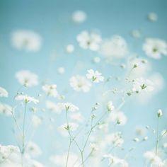 * little white flowers
