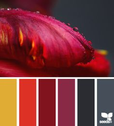 flora deep color palette - deep burgundy tones with black. The touch or orange and mustard yellow are great compliments!