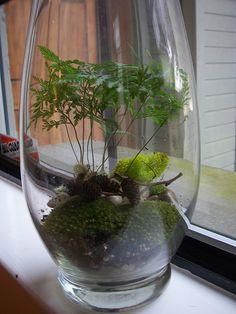 Forrest Terrarium, would make for cool center pieces Mini Terrarium, Terrarium Plants, Succulent Terrarium, Terrarium Ideas, Room With Plants, House Plants Decor, Plant Decor, Plant Rooms, Dry Plants
