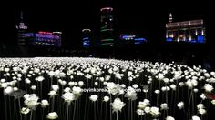 A Pinoy in Korea: Dongdaemun's 20,000 White Flowers: A Garden By Day, A Galaxy Of Stars At Night Real Flowers, White Flowers, One Saturday Morning, Blue Bus, Stars At Night, Selfie Time, Light Installation, Female Poses, Morning Light