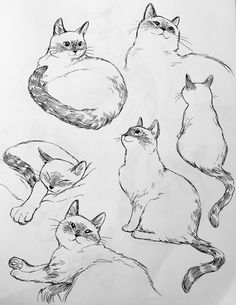 bev johnson — I missed drawing this little marshmallow Animal Sketches, Animal Drawings, Art Sketches, Cat Drawing Tutorial, Posca Art, Illustration Art, Illustrations, Cat Sketch, Face Art