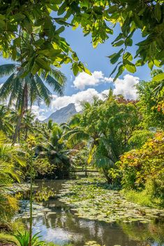 The green nature of Tehahupoo in Tahiti in French Polynesia: discover all my tips and address in Tahiti and its islands in French Polynesia! # polynesia Source by chloe_penderie Tahiti Vacations, Dream Vacations, Places To Travel, Travel Destinations, Places To Go, Gauguin Tahiti, Nature Photography, Travel Photography, Photography Tips