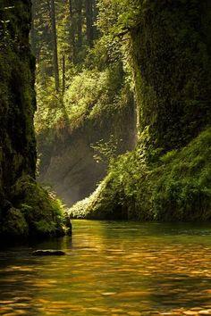 Golden Reflection, Eagle Creek, Oregon