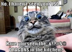 funny cat caption haven't seen your lsd but have you seen the dragons in the kitchen