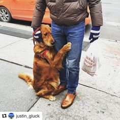This adorable dog stands on a corner in NYC and offers strangers hugs