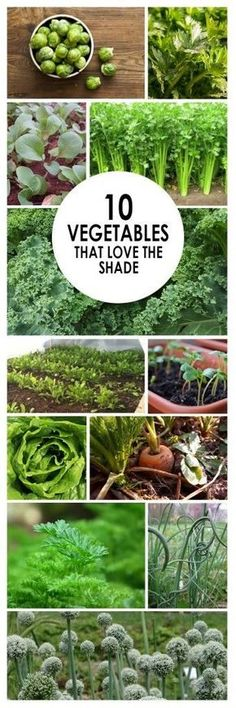 10 Vegetables that Love the Shade