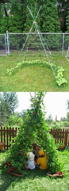 What a cute and clever idea! Clear around the planting area, for productive growth of the beans. Great hideaway for kids in the yard, leave the grass in the center.-- for the kids? Hell I'd go hide in that lol.