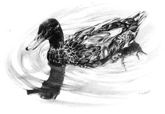 Duck Reflections - pencil rendering of a duck in its natural environment. #Art #ArtWork #PencilRendering #WaterFowl #MallardDuck