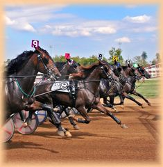 one day I would LOVE to adopt an x standardbred Racehorse! Standardbred Racing, Harness Racing, Racehorse, Dark Horse, Dressage, Horse Racing, Equestrian, Horses, Camden