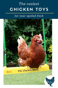 Your flock of chickens deserve the best. Find out the coolest chicken toys on the planet! Chicken Swing, Chicken Garden, Chicken Coop Plans, Raising Backyard Chickens, Keeping Chickens, Toys For Chickens, Pet Chickens, Funny Cat Videos, Funny Cats