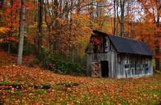 A rural country autumn barn in West Virginia surrounded by the wonderful colors of the fall foliage
