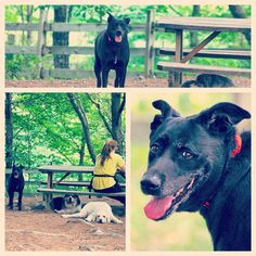 Pretty Sadie lady hanging in the shade. #evasplaypupsPA #dogs #dogcamp #smilingdogs #prettygirl #playtime #dogsocialization #dogsinnature #runfree #blackbeauty #itsadogslife #dogdaysofsummer #brooklyndogs #doggyvacays #doggievacays #dogboarding #muttigrees #dogsofinstagram #instapup #petportraits #endlessmountains #pleasantmount #northeasternpa #PA #pennsylvania