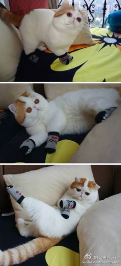 The best sock model ever. #Cats