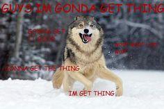 Moon Moon, the stupid wolf