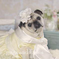 Sweet Lemon Meringue Beautiful Pug Dress by Pugs and Kisses