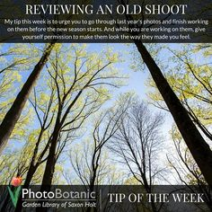 Photography Tip of the Week | Reviewing an Old Shoot | Full post here: http://photobotanic.com/reviewing-an-old-shoot | #photography #photographytips #howto #GardenPhotography