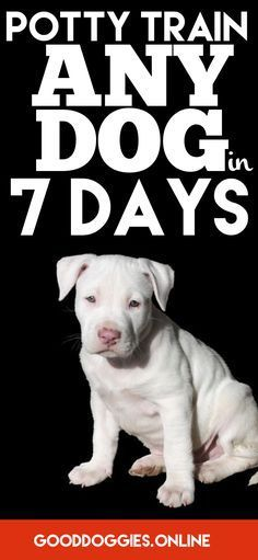 Learn how to house train or potty train your puppy or adult dog.