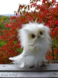 Disheveled Owl - This is the cutest owl ever!