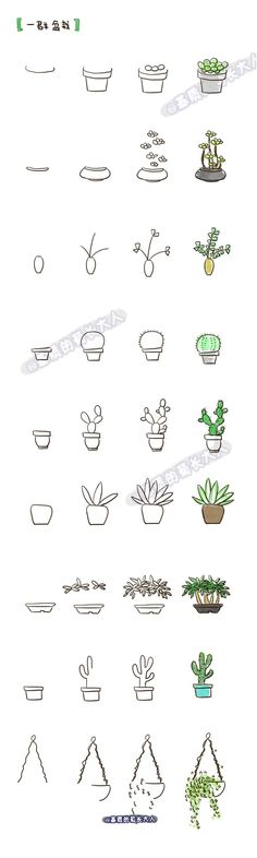 Cactus and plant doodles - step by step tutorial