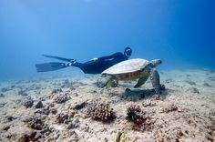 Freediving, Freedive Training & Underwater Freedive Photography with turtles in Hawaii