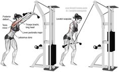 Cable straight arm pulldown. Target muscle: Latissimus Dorsi. Synergistic muscles: Teres Major, Lower Pectoralis Major, Pectoralis Minor, Posterior Deltoid, Levator Scapulae, Rhomboids, and Triceps Brachii (long head only).
