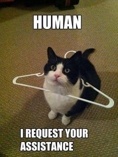 When and only when a cat has gotten themselves into a fix that they can't get out of do they go so low as to ask their human for help. See, I told you kitty cat--human are good for somethings just not everything.