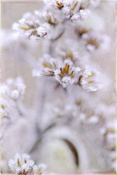 ice crystals on a flower