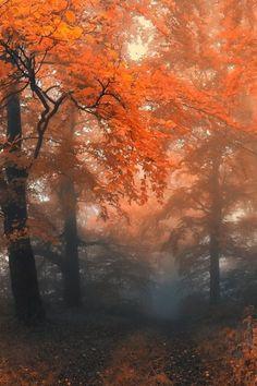 ~Autumn mist...