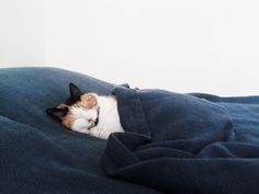 {bedtime} shhh. sleep kitty. via theponyremark