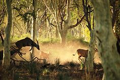 Go on a walking tour in the Kruger National Park - the Pafuri walk Kruger National Park, National Parks, Walking Tour, South Africa, To Go, Wine, Travel, Viajes, Trips
