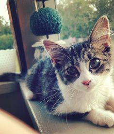 Went to a bonfire and came home with a cat. This is Squirrelly Girl by khrispii cats kitten catsonweb cute adorable funny sleepy animals nature kitty cutie ca