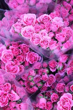 Pink roses - just love flower markets