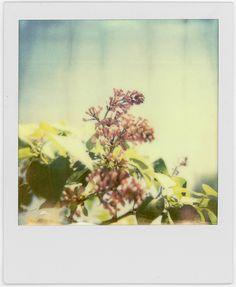 Floral.