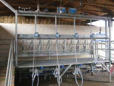 afimilk modular sheep & goat parlor,  complete package.