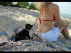 The Best Funny Videos Clips Compilation on Youtube 2015 Part 01